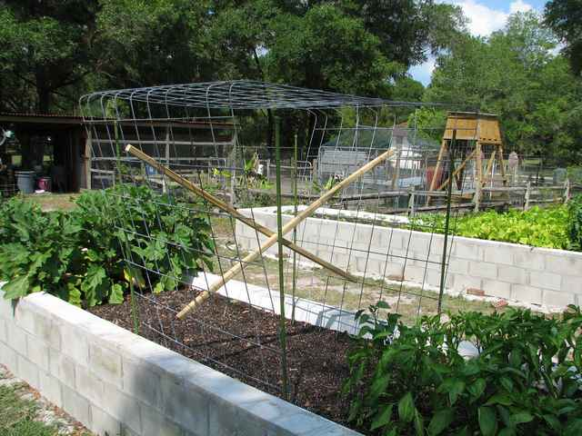 Seven Very Cheap Garden Fence Ideas Photograph Related To