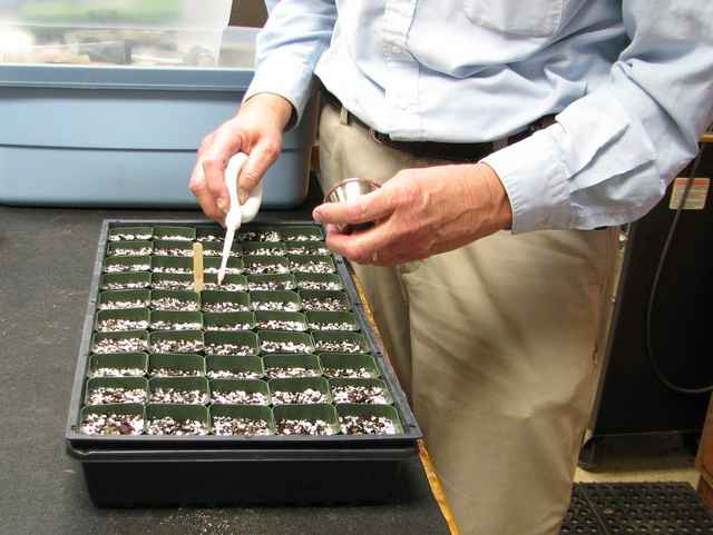 Using the Gro-Mor vacuum seed dispenser to plant bell pepper seeds.