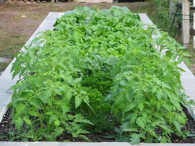 garden_20101129.jpg