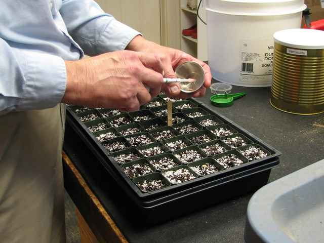A small number of seeds are placed in a cup. The seeds are then picked up and moved, one at a time, into the seed holes.